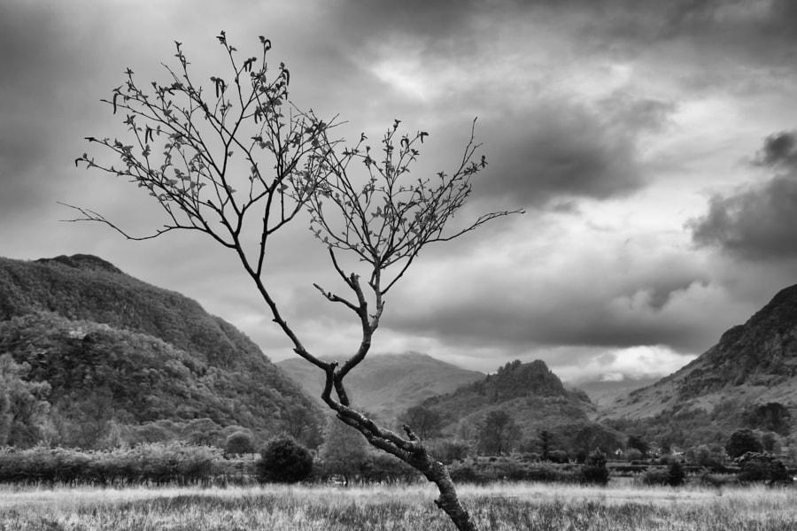 Manesty Tree