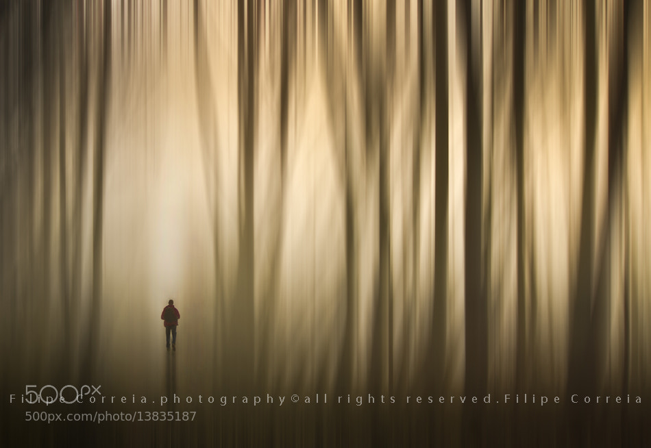 Photograph Escape by Filipe Correia on 500px