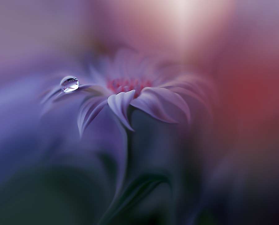 Remake... by Juliana Nan on 500px.com