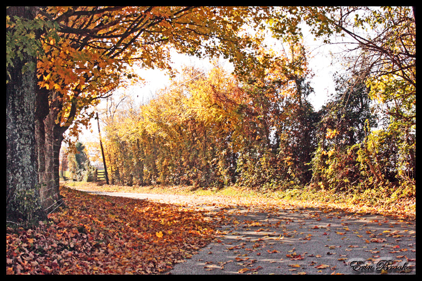Photograph Autumn Drive by Erin Brooke on 500px
