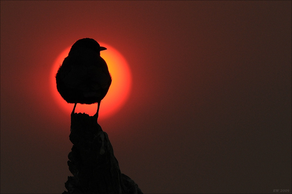 Photograph Watching the sunset by Elmar Weiss on 500px