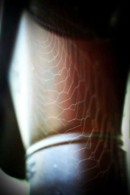Photograph Web by Lionel Gouws on 500px