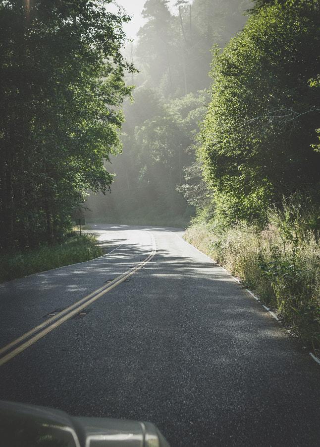 _morning mist