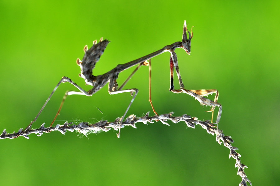 Photograph Mantis by Yılmaz  Uslu on 500px
