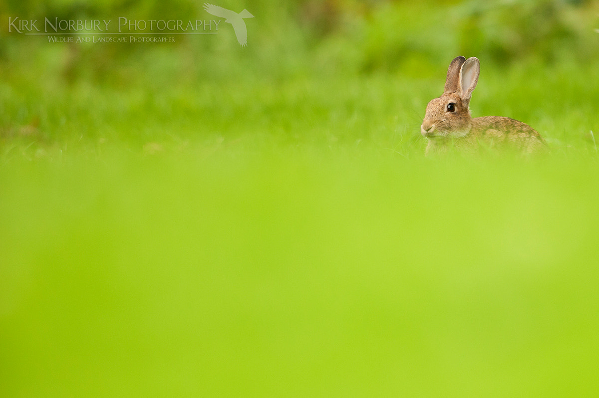Photograph A Rabbit Amongst The Greenery by Kirk Norbury on 500px