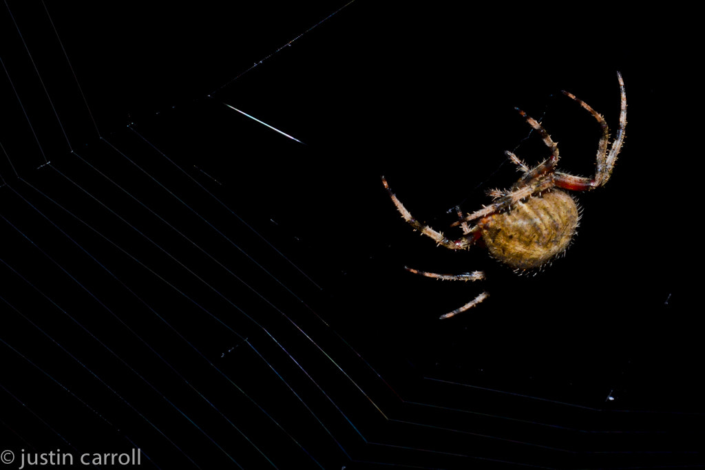 Photograph Web Making by Justin Carroll on 500px