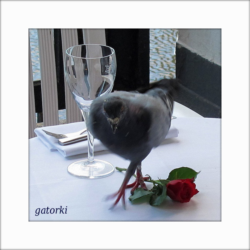 Photograph restaurant - cover accessory by gatorKI (unique) on 500px
