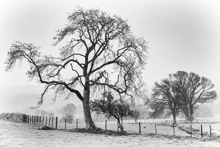 Trees near Caldbeck