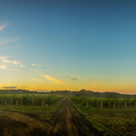 Foggy Wine Pano