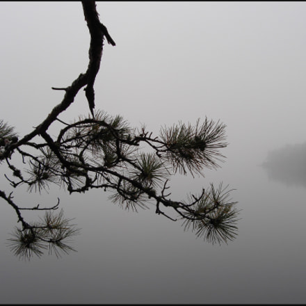 Tree Branch in the fog
