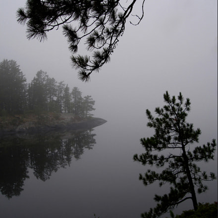 Island with trees and fog