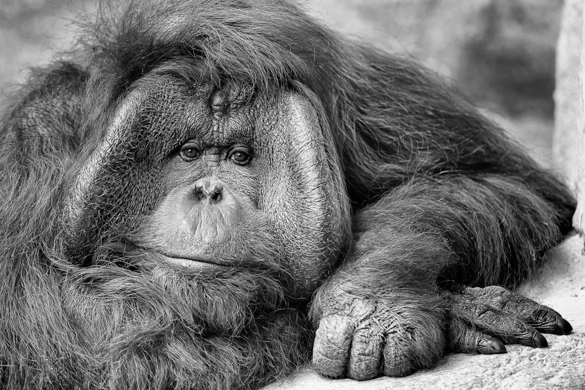 Photograph A Face Only a Mother Could Love by Glenn Nagel on 500px