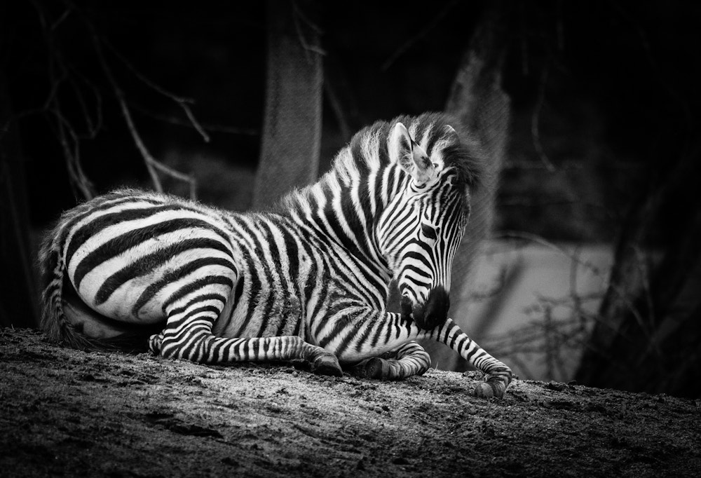 Photograph Beauty in Black & White by Frank Rønsholt on 500px