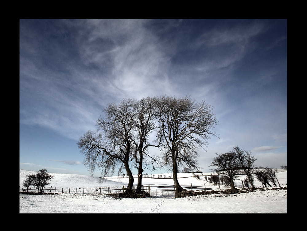 Photograph Winter 2010 by Neil Maughan on 500px