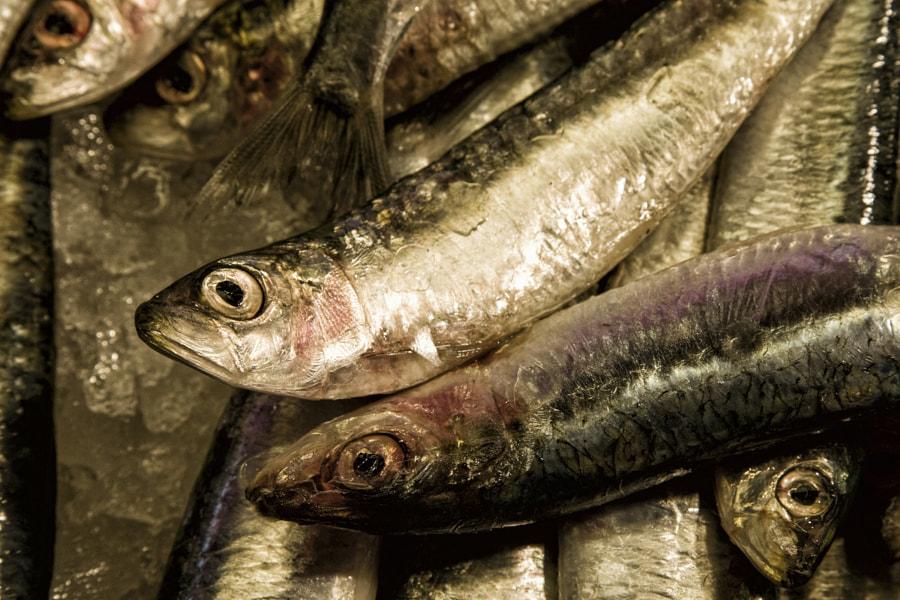 Venice Fish Market 1
