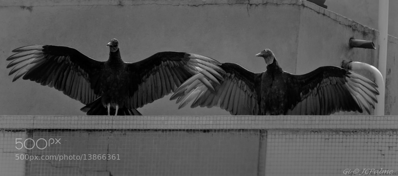 Photograph Banho de sol. by JC Palme on 500px