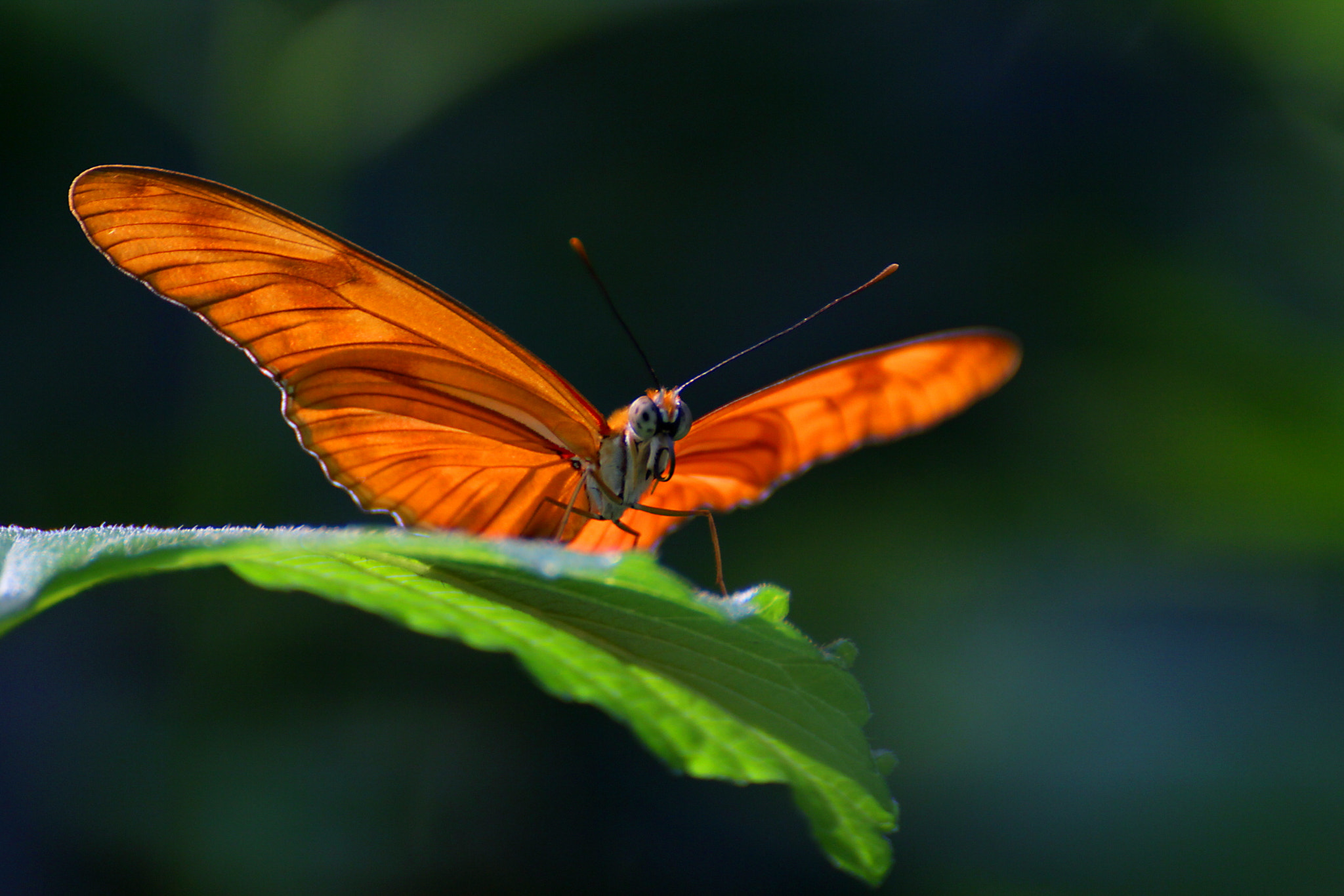 Photograph Orange Butterfly on Green Leaf by HankknaH on 500px