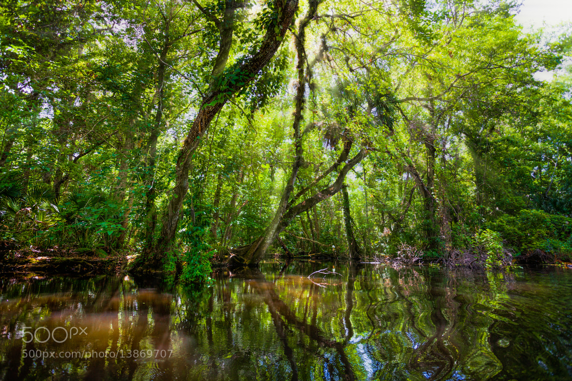 Photograph Deep in the Swamp by George Bloise on 500px