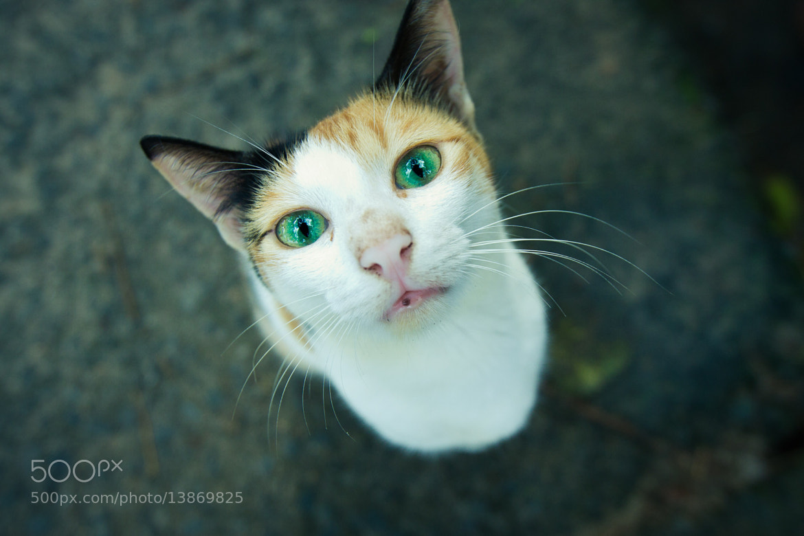 Photograph The curious cat! by Christin Mathew on 500px
