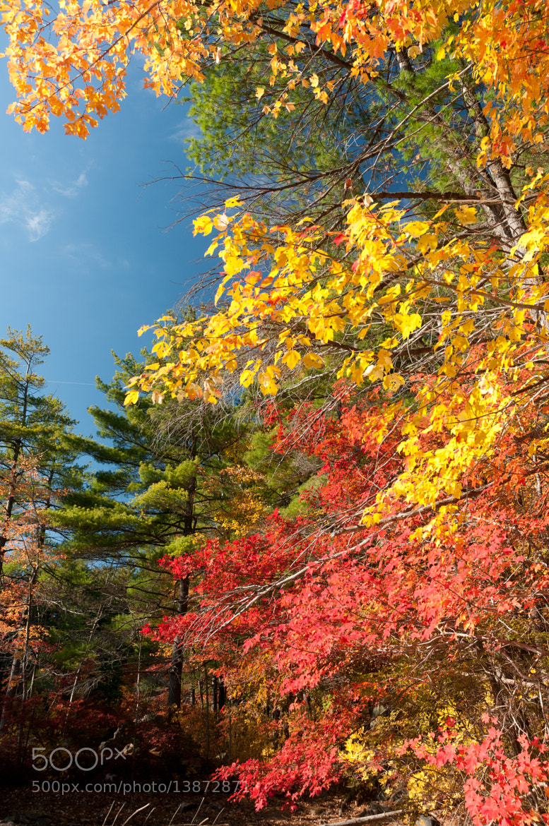 Photograph Fall Colors by Paul Mozell on 500px