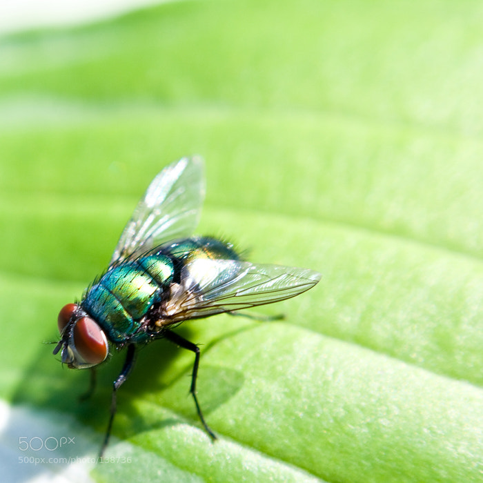 Photograph Macro on the Fly by Jamin G on 500px
