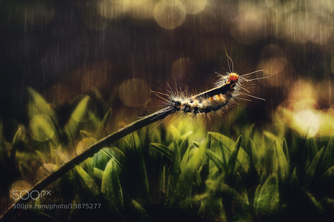 Photograph Hanging on by Firman Afrianto on 500px