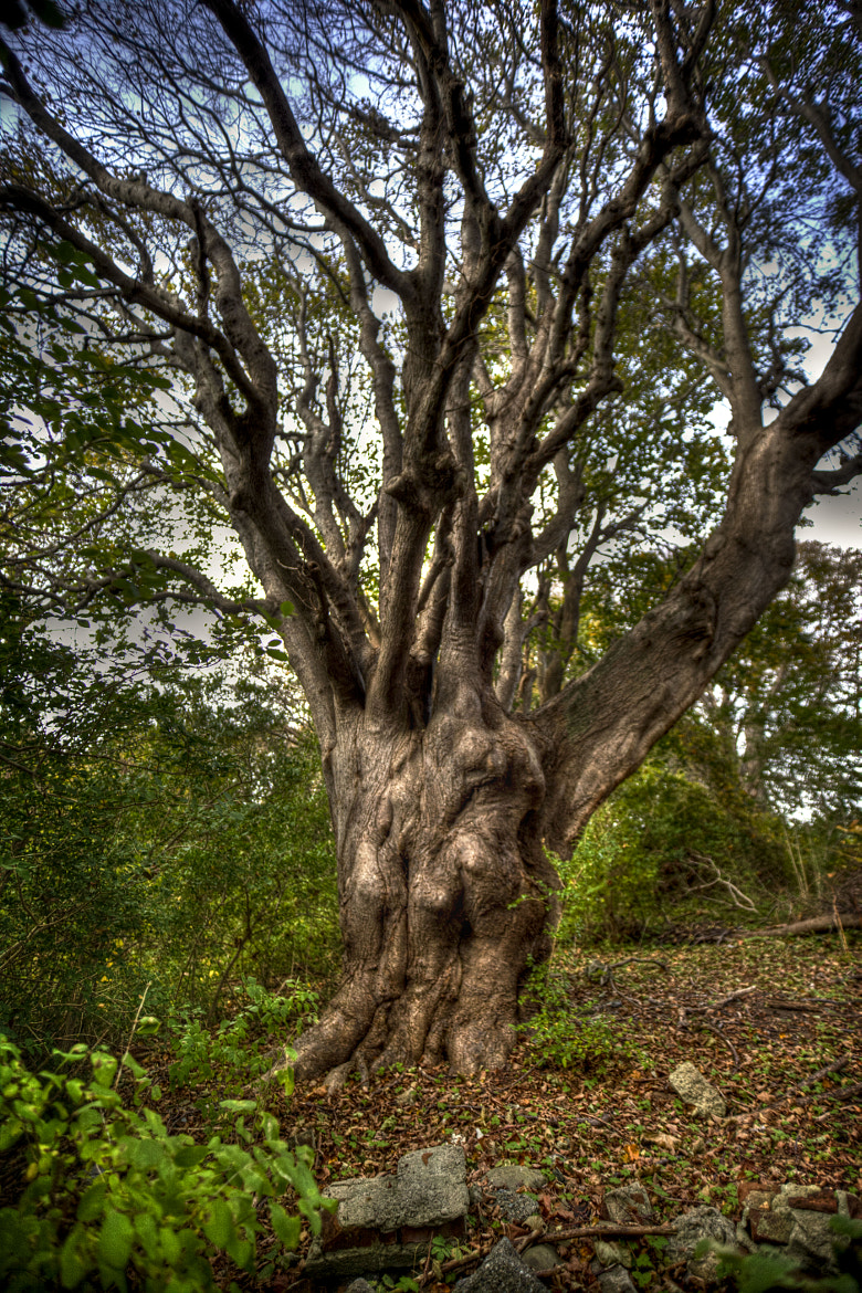 Photograph Buddha Tree by Terry Letton on 500px