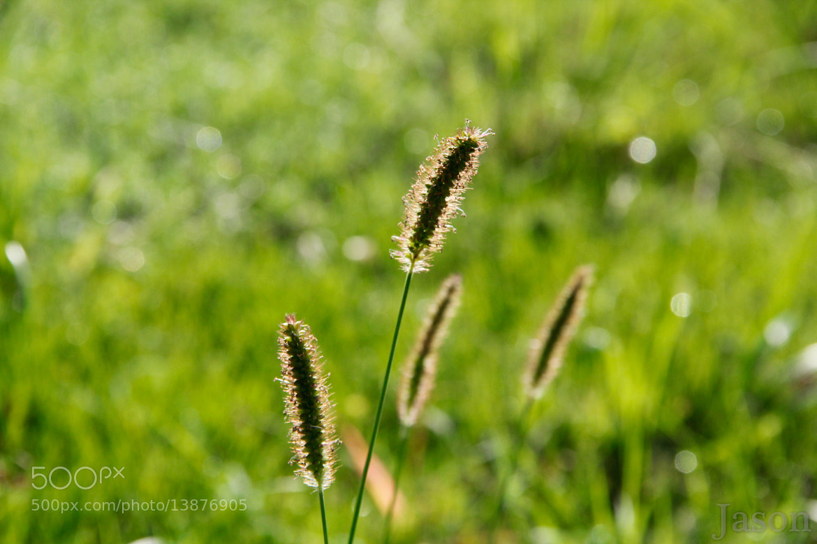 Photograph Grass by Jason Day on 500px