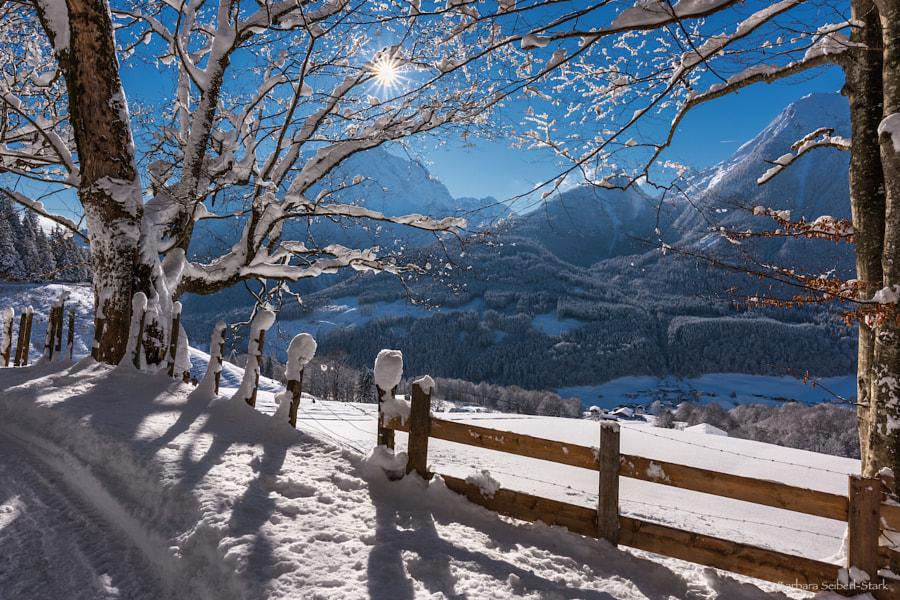 Winterdream, автор — Barbara Seiberl-Stark на 500px.com