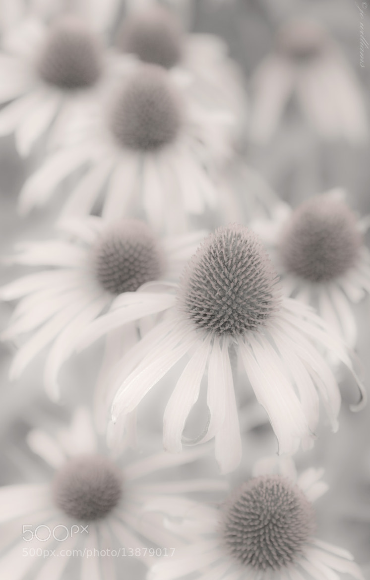 Photograph Fading Summer Dayz....... by jo williams on 500px