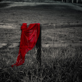 A little red  by Rucsandra Calin (anda-calin)) on 500px.com