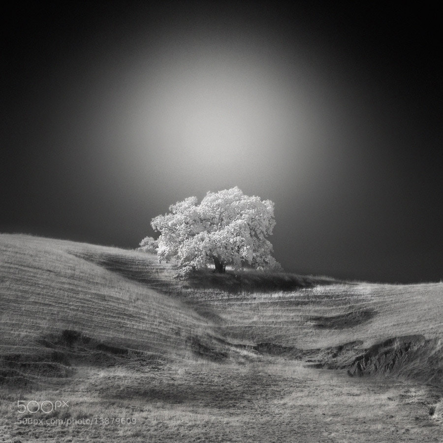 Photograph white tree by Nathan Wirth on 500px