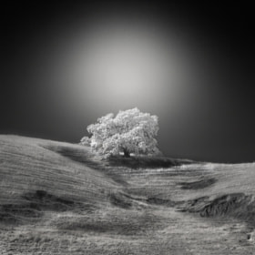 white tree by Nathan Wirth (nlwirth)) on 500px.com