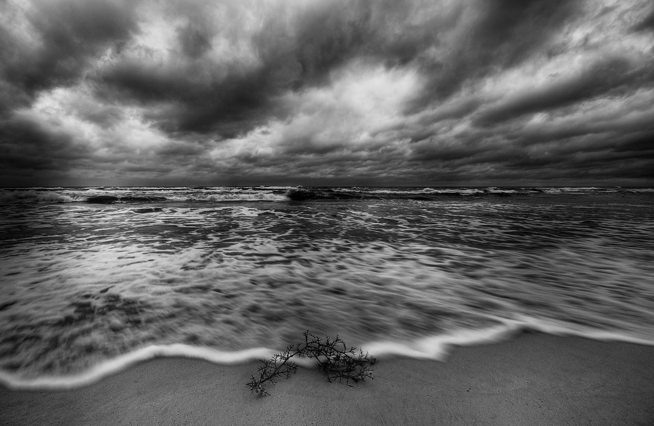 Photograph Stormy by paralaxa * on 500px