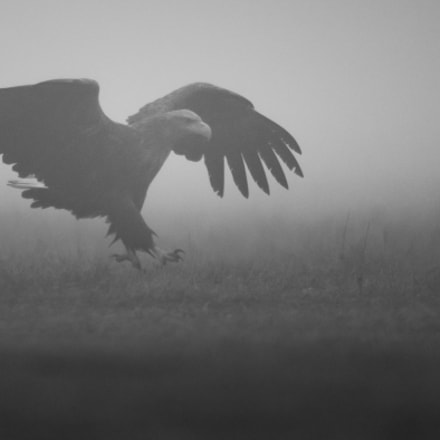 Out Of The Mist!, Sony ILCA-77M2, Sony 500mm F4 G SSM (SAL500F40G)