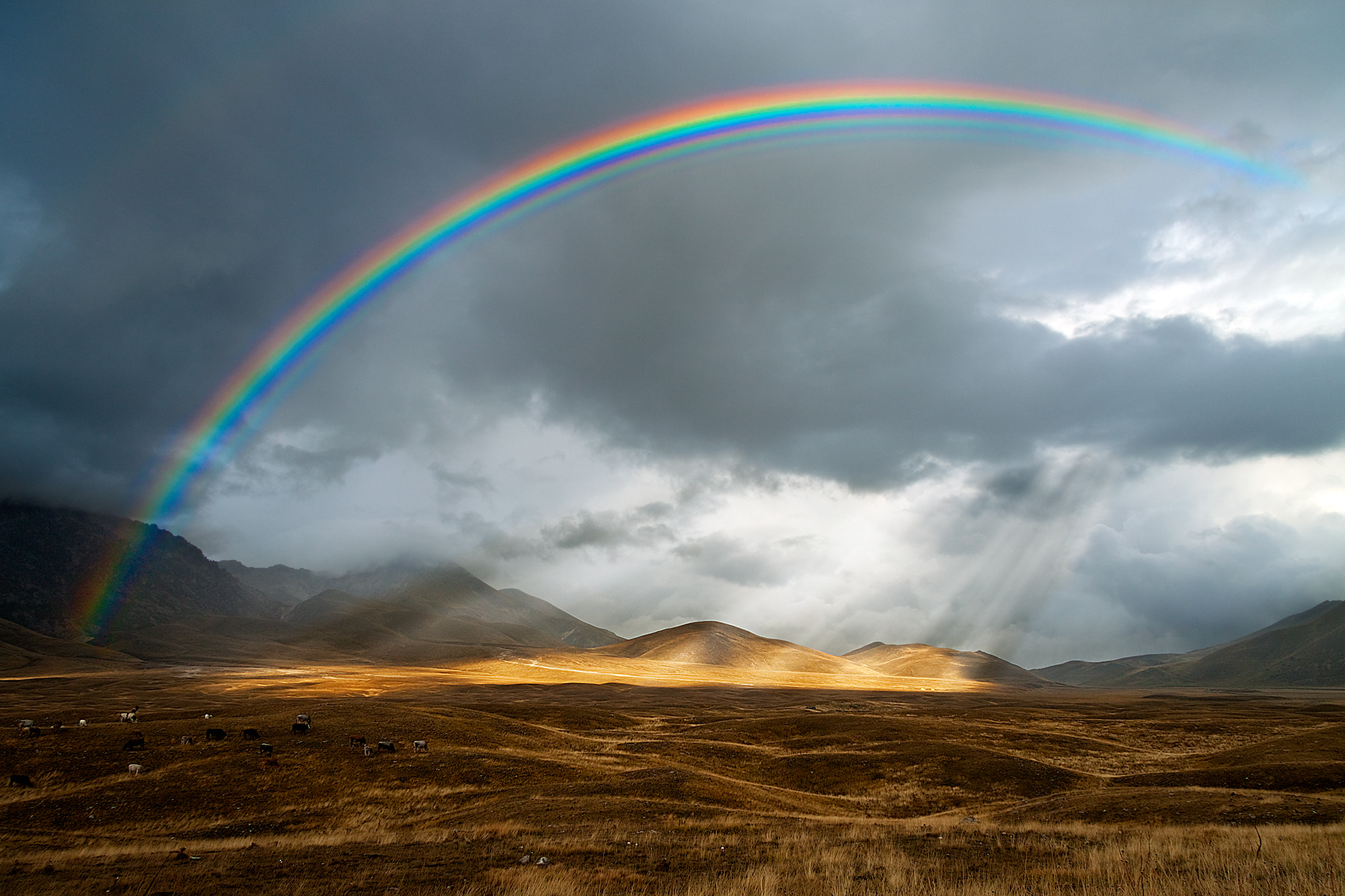 Photograph Rainbow, Field Emperor by Paolo Presutti on 500px