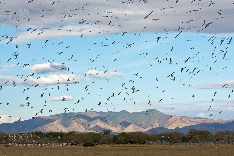 Photograph The birds by Jaume Martí on 500px