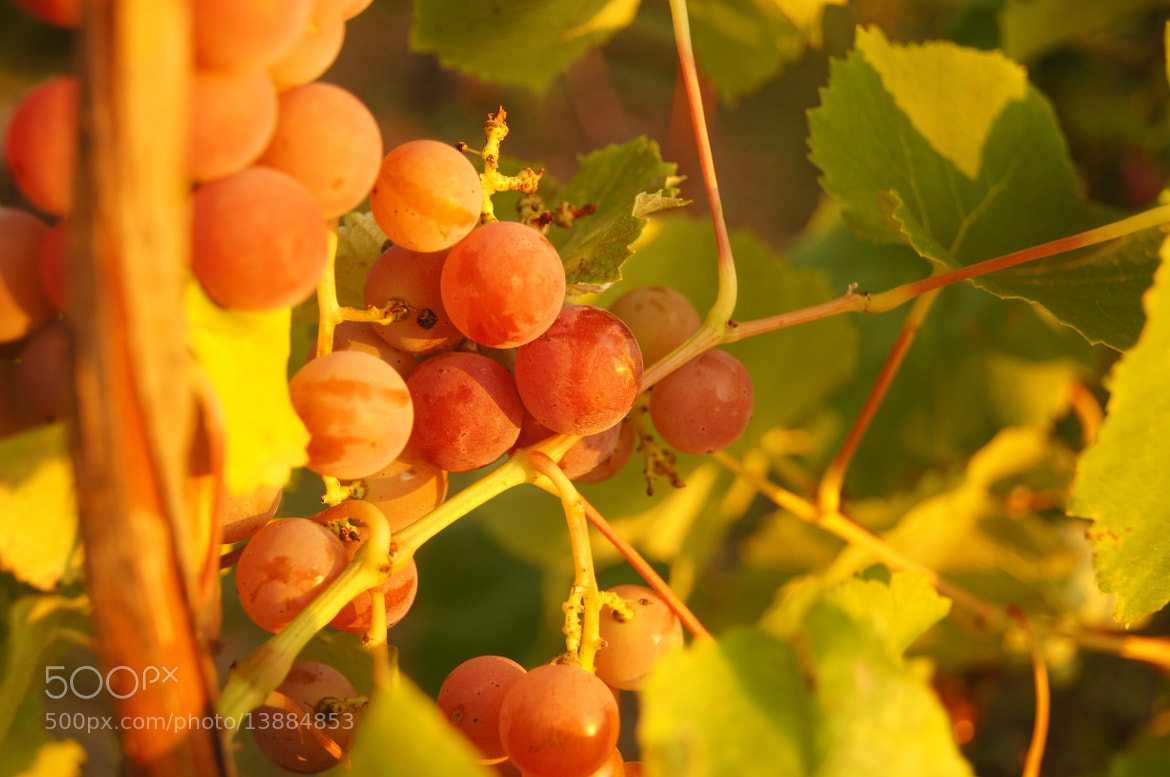 Photograph grapes by Oleg Chu on 500px