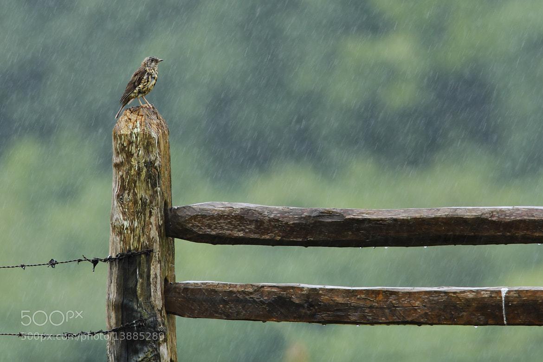 Photograph Rain by Andrés Miguel Domínguez on 500px