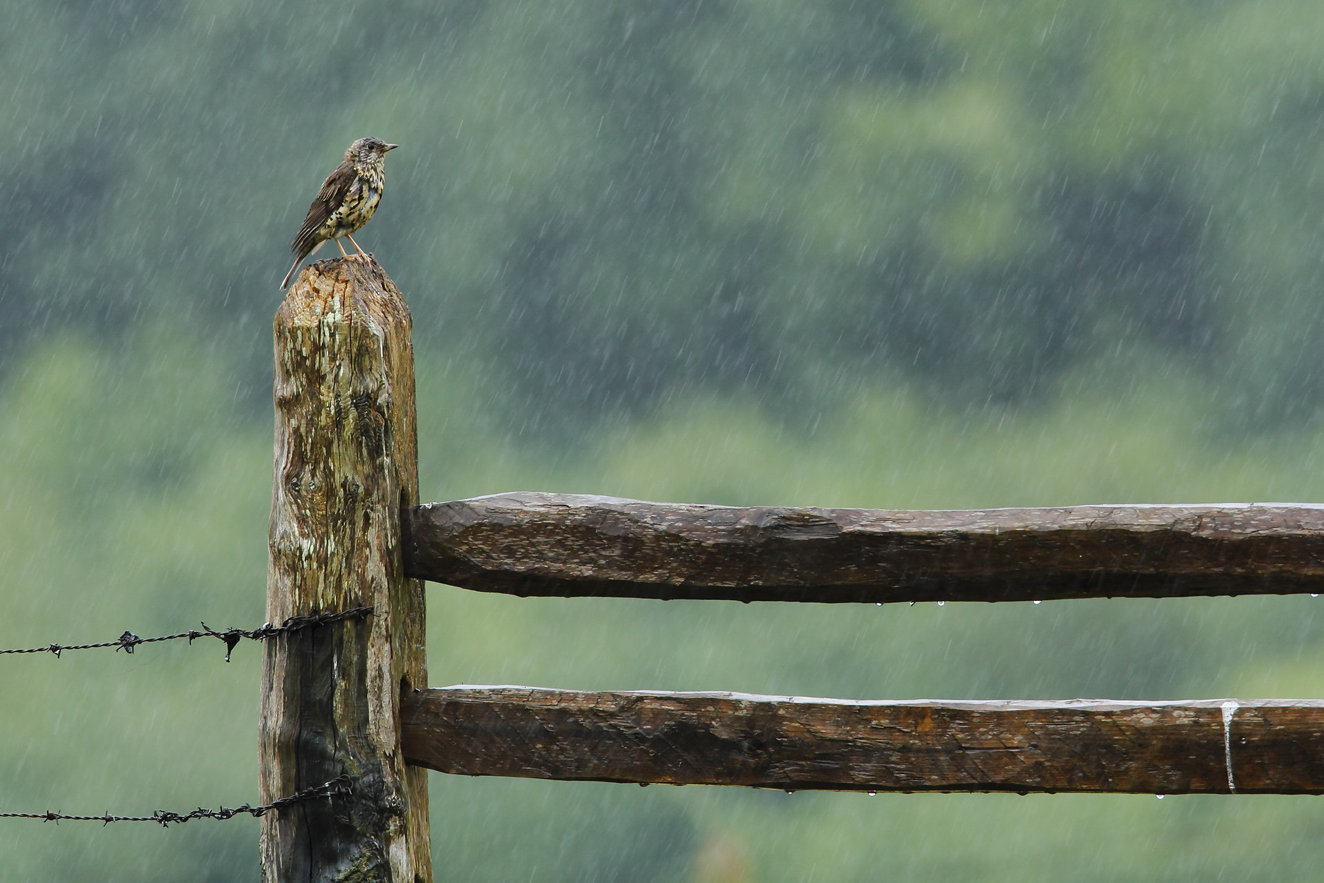 Photograph Rain by Andrés Miguel Domínguez on 500px