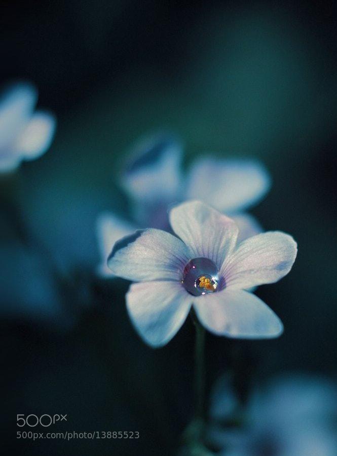 Photograph ..drop silence... by Juliana Nan on 500px