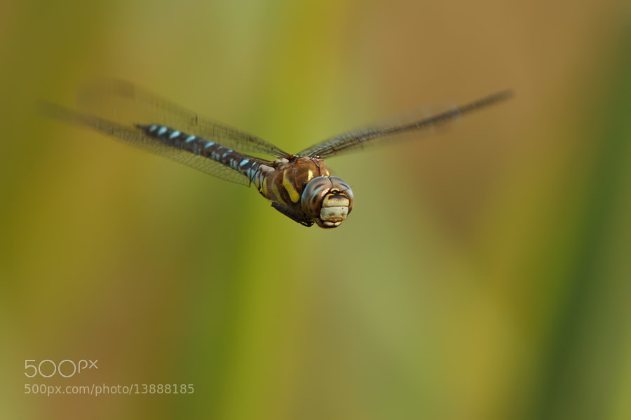 Photograph Flying dragon by Roeselien Raimond on 500px