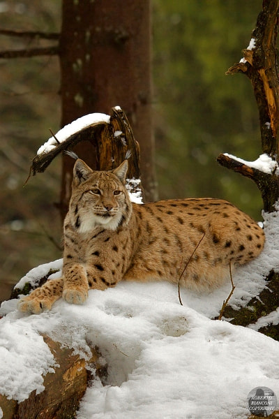 Photograph The Queen of the forest by Roberto Bianconi on 500px