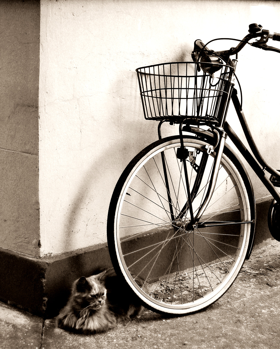 Photograph The cat and the bicycle by Dario Monti on 500px
