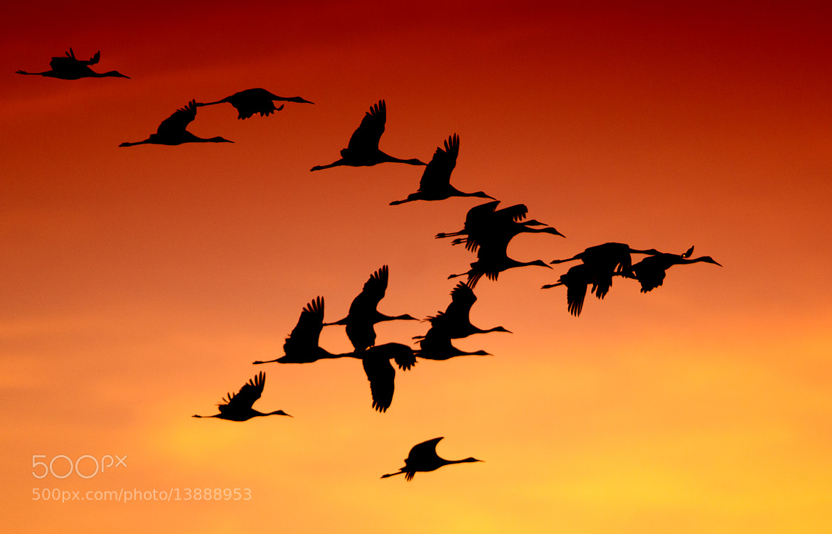 Photograph Sandhills at Sunset by John Brunjes on 500px