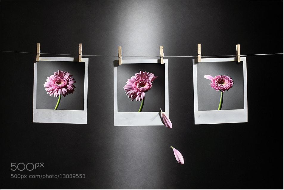 Photograph September by Victoria Ivanova on 500px