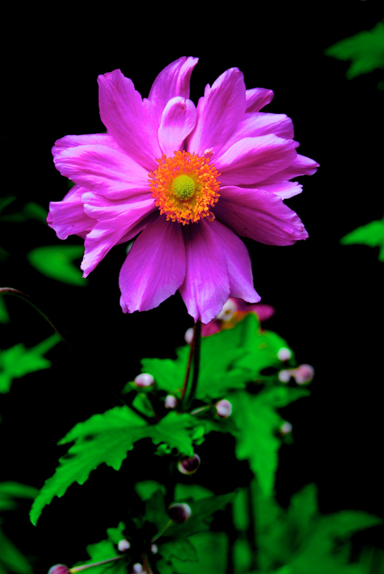 Photograph Pink by Jules Calop on 500px