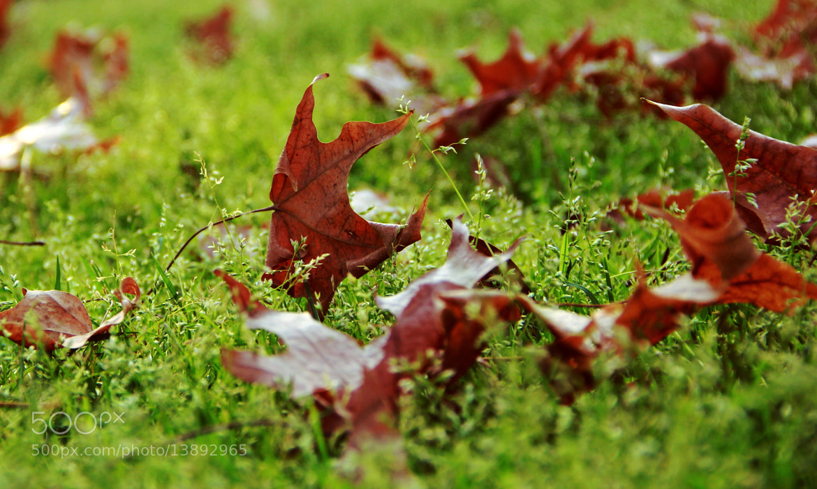 Photograph Leaves by Or Shamay on 500px
