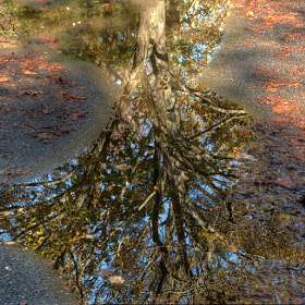 Tree Reflection by MICHAEL GOFFIN (photoartbymichael)) on 500px.com