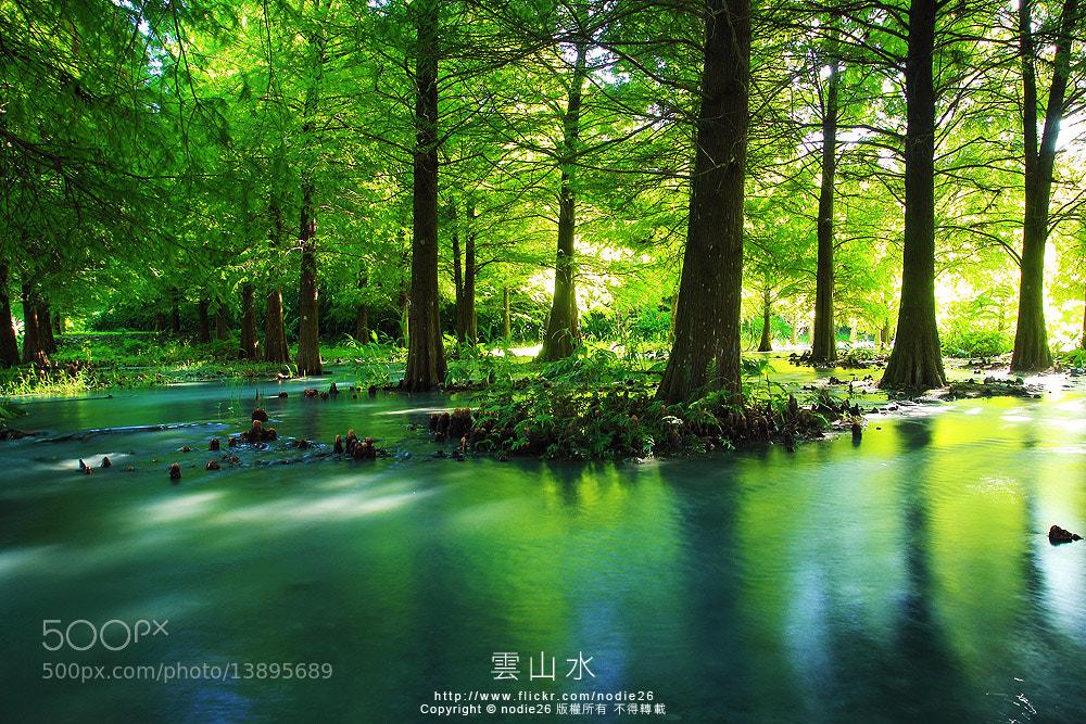 Photograph 花蓮 雲山水 落羽松 by Nodie Yang on 500px